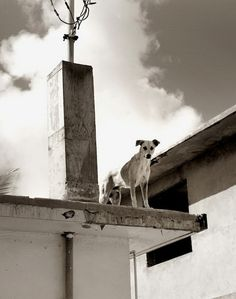 Dogs by Traer Scott #inspiration #photography #animals