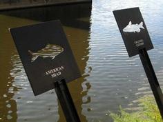 local fish species