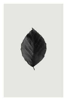 """Saatchi Art Artist Anders Bundgaard; Photography, """"Beech"""" #art"""