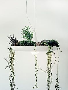 "CJWHO â""¢ (babylon suspended garden light fixture by studio...) #lamp #crafts #design #interiors #furniture #garden #green"