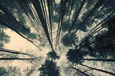 Fotostrecke 2011/01 » Fotografie » Ausstellung » Forum » Supertopic #forest #photography #trees #nature