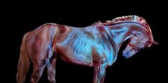 'All the Wild Horses' on the Behance Network #photography #horse