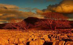 Steve Thompson #nature #photography #landscape