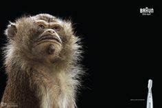 Precision Trimming on the Behance Network #photography #animal #retouch #monkey