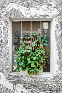 plant, leaves, round, mural, window