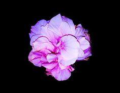 Naturally Beautiful Flower #flowers #collection #photography #pic #beautiful #amazing #shot #photo