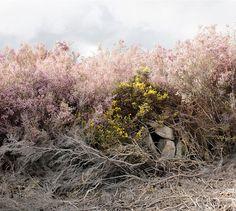 Landscape Photography by Paul Gaffney #photography #landscape #inspiration