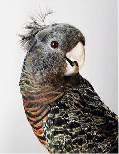 Wild Cockatoos by Leila Jeffreys #photography #animals