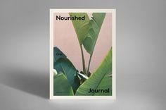 Aesthete Curator : Nourished 01