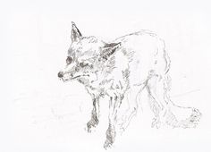 Illustration by Tuscani Cardoso #fox #design #black #illustration #pen #art #tuscani #sketch