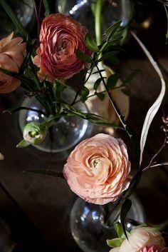Ranunculus #photo #interiors #flowers #franzen #nicole