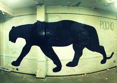 POCHO | Gaucholadri #gaucholadri #streetart #argentina #wall #pocho #painting