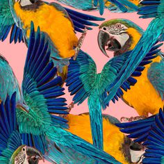 Ara pattern #pattern #tropical #poland #ukraine #parrot