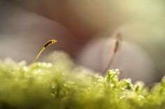 Macro Photography by Stephane Occhipinti