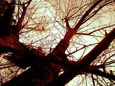 alvéolos #photo #tree