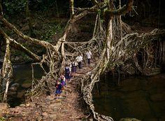 #photo Amos Chapple #bridge #nature #place