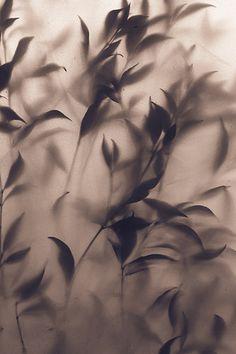 David Gomez #photography #nature #plant #leaf #foliage #botany
