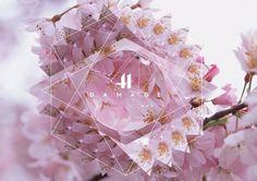 Trent Alexander Hernandez #design #photography #nature #flower #logo