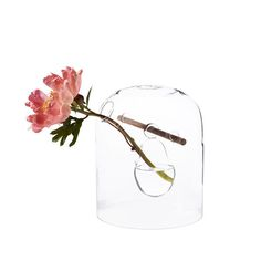glass vase with flower #glass #transparent #vase #flower