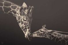 Zoo Animals by Manuela Kulpa #inspiration #photography #animal