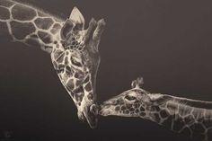 Zoo Animals by Manuela Kulpa #inspiration #photography #animal