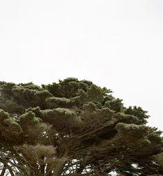 Trees #tree #sky #earth #nature #trees #green