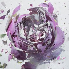 Liquid Nitrogen exploding flower by Martin Klimas #explosion #air #gun #liquide #liquid #nitrogen #klimas #azote #flower #martin