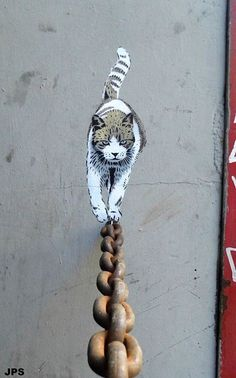 Barcelona #photography #cat #wire #chain #banksy #feline #prowl #tight rope