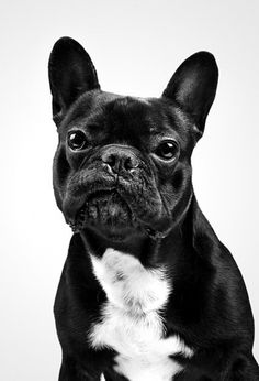 // DOG PORTRAITS // on the Behance Network #photography #dog