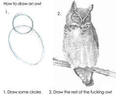 How to draw an owl (Pic) | Daily Dawdle #drawing #owl