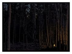 40 rovers #forest #illustration #fire
