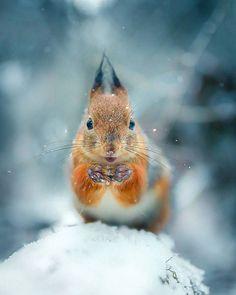 Wildlife Finland: Dreamlike Animal Portraits by Joachim Munter