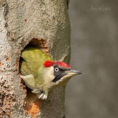 Birds of Germany: Wonderful Bird Photography by Anke Kneifel