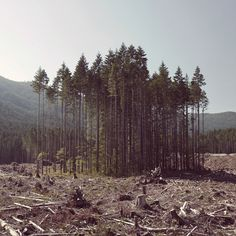 Clearcut Island #photography