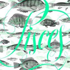 Pisces on Behance #lettering #copperplate #sergi ferrando #pisces