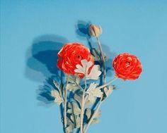 flower #flower
