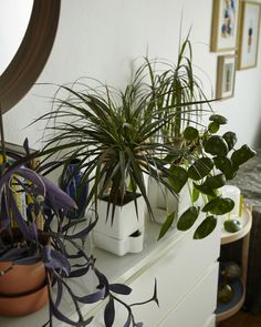Home furnishing with plants @ Igor's on www.happyinteriorblog.com