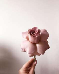 #bhgflowers: Beautiful Flower Photography by Kelsea Olivia Gaynor