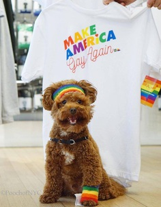 Most Dog Friendly Stores in America - American Apparel