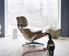 Nicole Bachmann Eames Chair & Sammy! #interior #inspiration #spaces #design #architecture