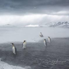 Fine Art Wildlife Photography by Dmitry Arkhipov