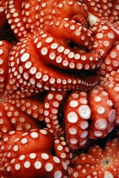 [redthreat] #octopuss