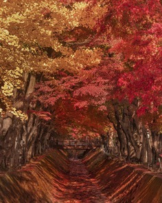 Amazing Nature Photography in Japan by Makiko Samejima