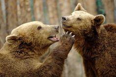 Animal Photography by Goran Anastasovski