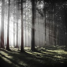 Wald on Behance #photography