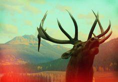 Flickr Photo Download: wildlife analysis #photo #deer #animal