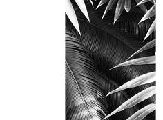 CULT – SACHA MARIC #foliage #graphic #b&w