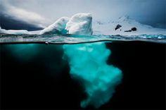 David Doubilet #ice #landscape