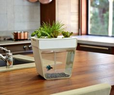 Aqua Farm by Back To The Roots #gadget #home