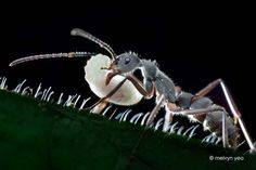 Detailed Macro Photos Of Insects by Melvyn Yeo